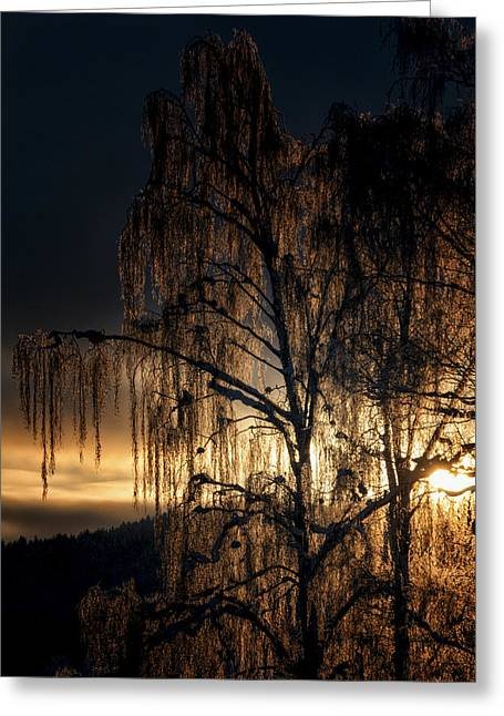 Winter Roads Greeting Cards - Golden Tree Greeting Card by Erik Brede