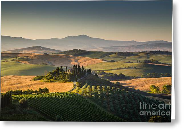 Wine Scene Greeting Cards - Golden Tuscany Greeting Card by JR Photography