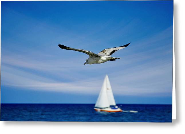 Sailboat Photos Greeting Cards - Good Karma Greeting Card by Laura  Fasulo