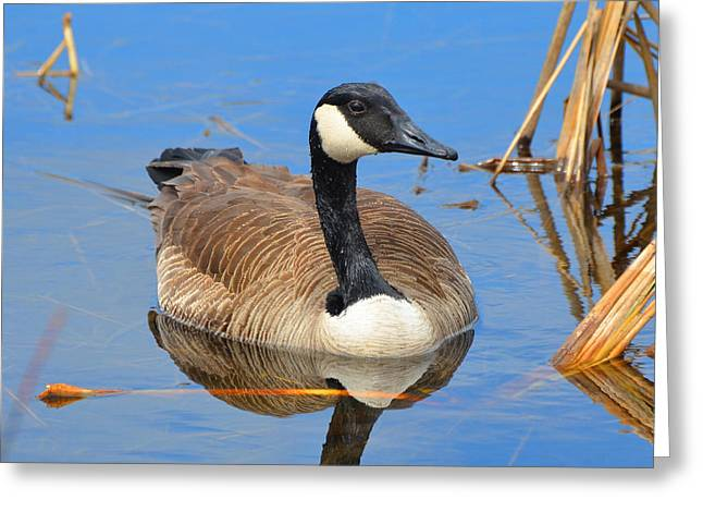 Hungry Chicks Greeting Cards - Goose Greeting Card by Diane Picard