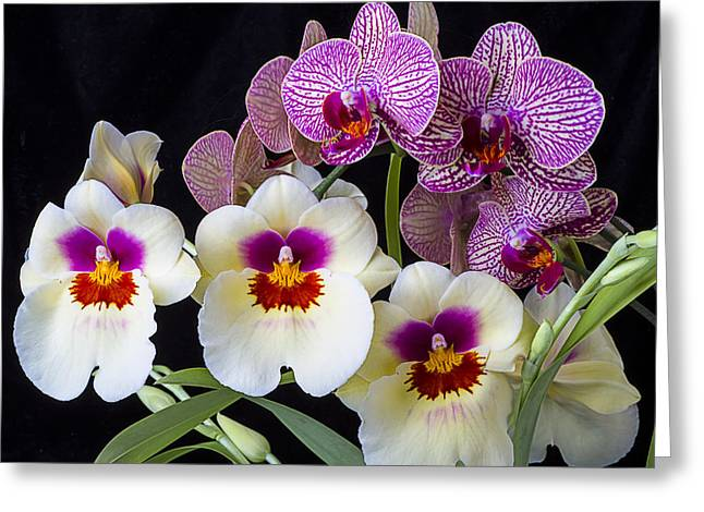 Row Greeting Cards - Gorgeous Orchids Greeting Card by Garry Gay
