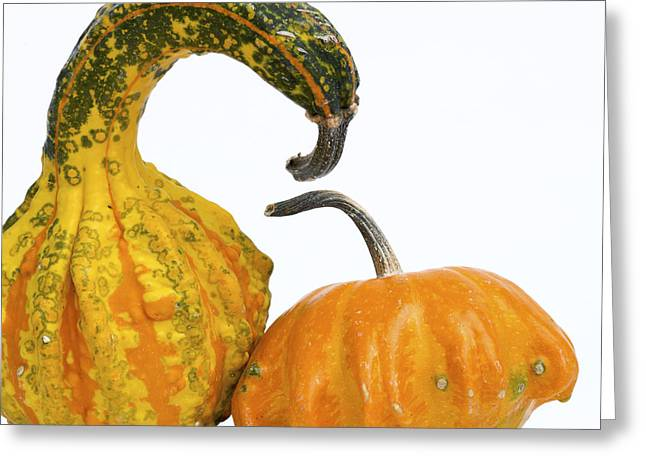 Food And Drink Greeting Cards - Gourds and pumpkins Greeting Card by Bernard Jaubert