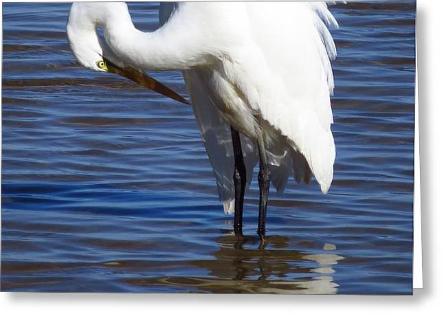 Wadingbird Greeting Cards - Graceful Greeting Card by Phyllis Beiser