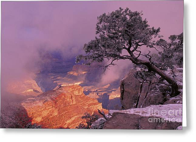 Winter Storm Greeting Cards - Grand Canyon National Park Greeting Card by George Ranalli