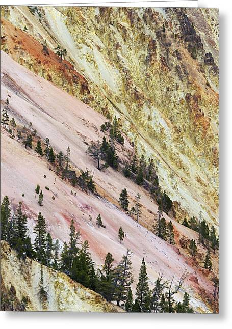 Photos Of Autumn Greeting Cards - Grand Canyon Of Yellowstone Wyoming Greeting Card by Bill Coster