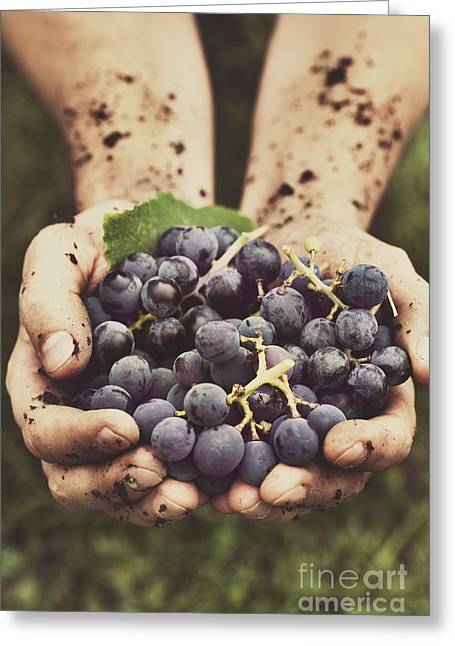 Mud Season Greeting Cards - Grapes harvest Greeting Card by Mythja  Photography