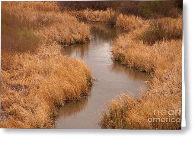 Arizona Wildlife Greeting Cards - Grass And Stream, Arizona Greeting Card by Richard and Ellen Thane