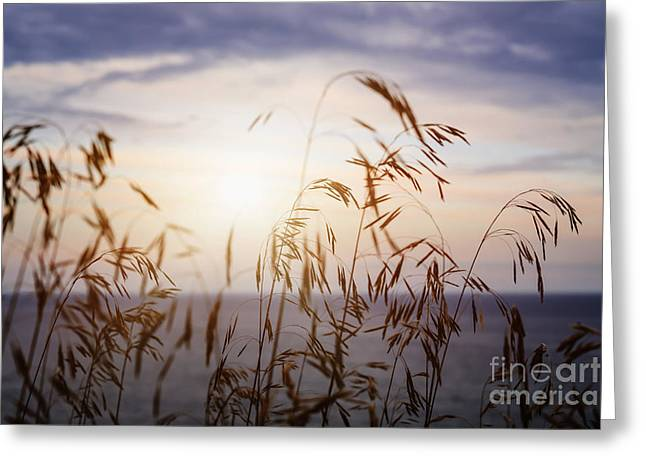 Sunflare Greeting Cards - Grass at sunset Greeting Card by Elena Elisseeva
