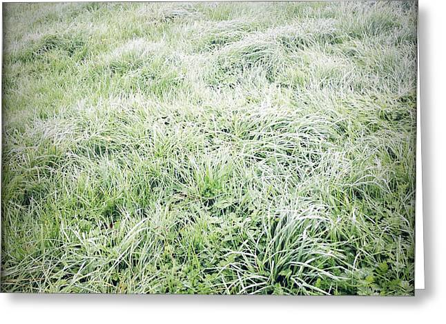 Dew Greeting Cards - Grass Greeting Card by Les Cunliffe
