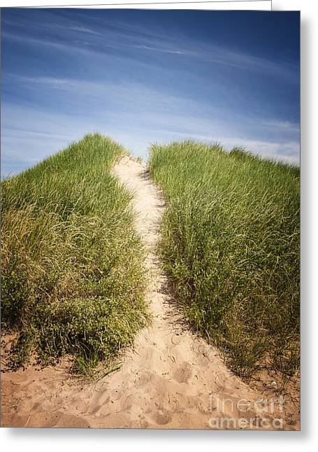 Pei Greeting Cards - Grass on sand dunes Greeting Card by Elena Elisseeva