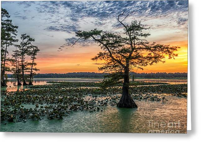 Lilly Pads Greeting Cards - Grassy Island sunset Greeting Card by Anthony Heflin