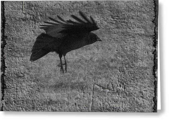 American Crow Greeting Cards - Gray Greeting Card by Gothicolors Donna Snyder