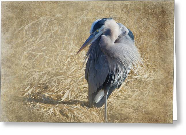 Orange Beak Greeting Cards - Great Blue Heron Greeting Card by Angie Vogel