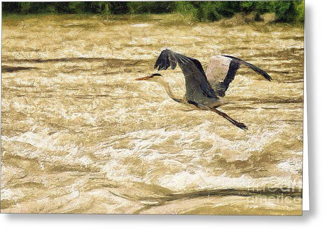 Head Stand Paintings Greeting Cards - Great grey heron in flight Greeting Card by Odon Czintos