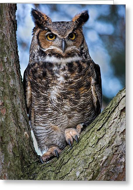 Great Horned Owl Greeting Card by Dale Kincaid