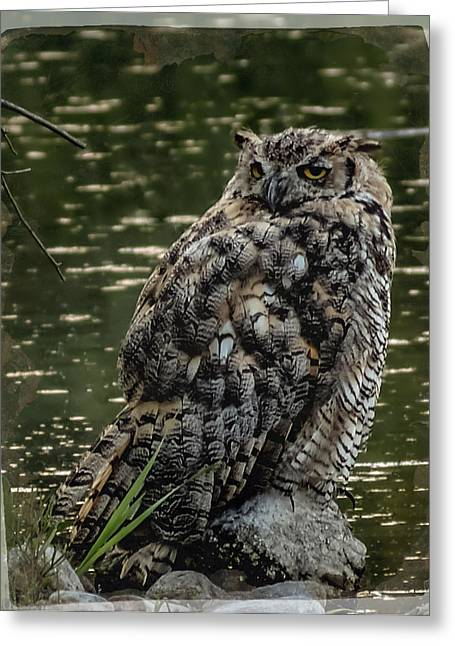 Fountain Creek Nature Center Greeting Cards - Great Horned Owl Greeting Card by Ernie Echols