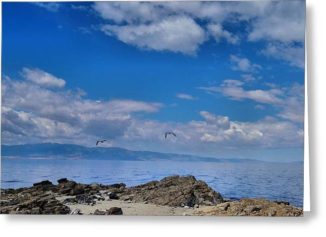 Flying Seagull Greeting Cards - Great Salt Lake Greeting Card by Dan Sproul