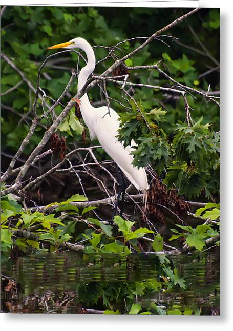 Great White Egret Greeting Card by Chris Flees