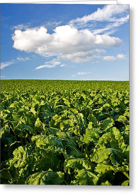 Field. Cloud Greeting Cards - Green and Blue Greeting Card by Jason KS Leung
