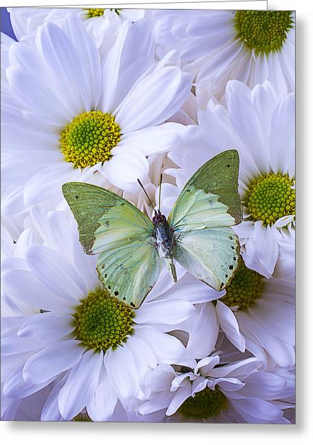 Gorgeous Flowers Greeting Cards - Green Butterfly  Greeting Card by Garry Gay