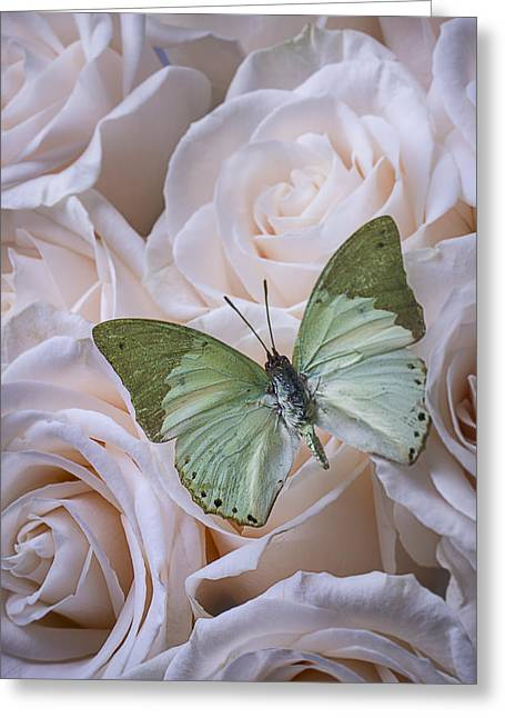 Gorgeous Flowers Greeting Cards - Green Butterfly On White Roses Greeting Card by Garry Gay