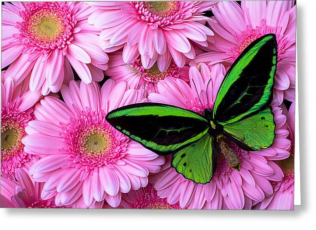 Pink Chrysanthemums Greeting Cards - Green Butterfly Resting Greeting Card by Garry Gay