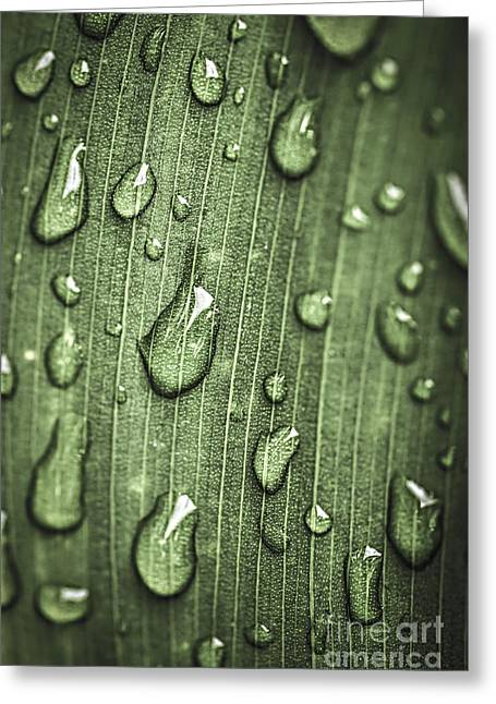 Drop Greeting Cards - Green leaf abstract with raindrops Greeting Card by Elena Elisseeva