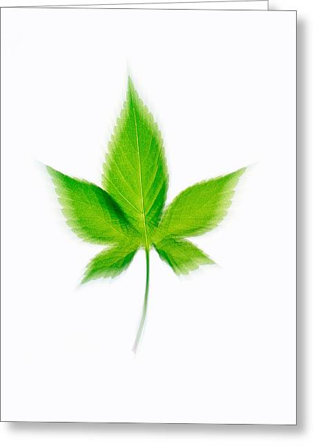 Directly Above Greeting Cards - Green Leaf On Beige Background Greeting Card by Panoramic Images