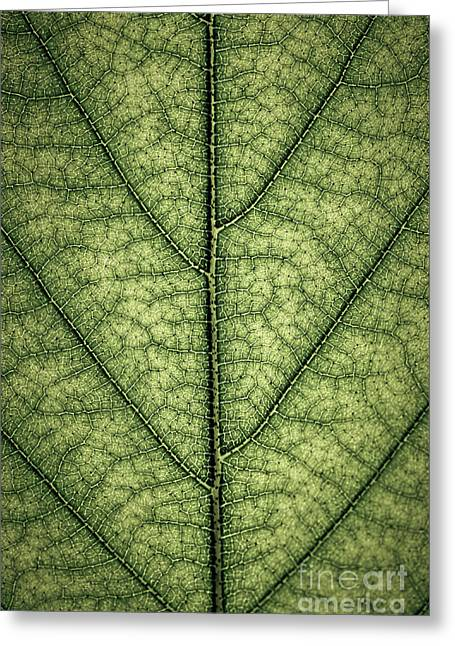 Fresh Green Greeting Cards - Green leaf texture Greeting Card by Elena Elisseeva