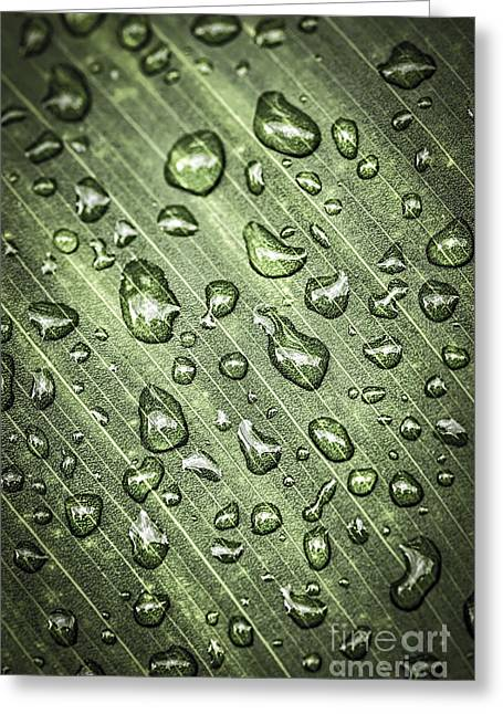Dew Greeting Cards - Green leaf with raindrops Greeting Card by Elena Elisseeva