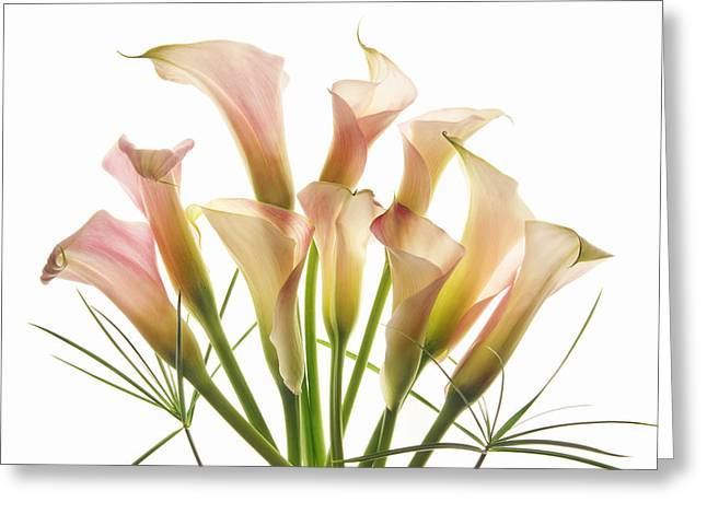 Blooms Greeting Cards - Greet the Day Greeting Card by Leda Robertson