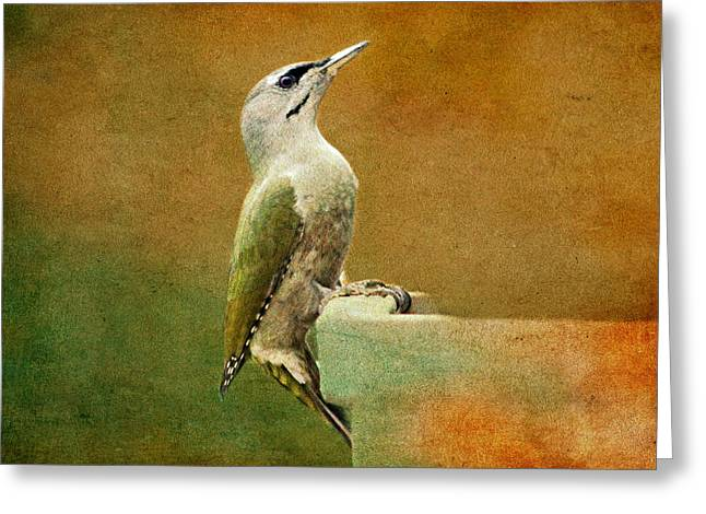 Woodpecker Greeting Cards - Grey-headed Woodpecker Greeting Card by Heike Hultsch