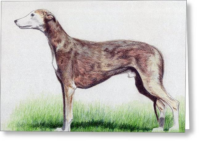Greyhound Dog Greeting Cards - Greyhound Dog Greeting Card by Olde Time  Mercantile