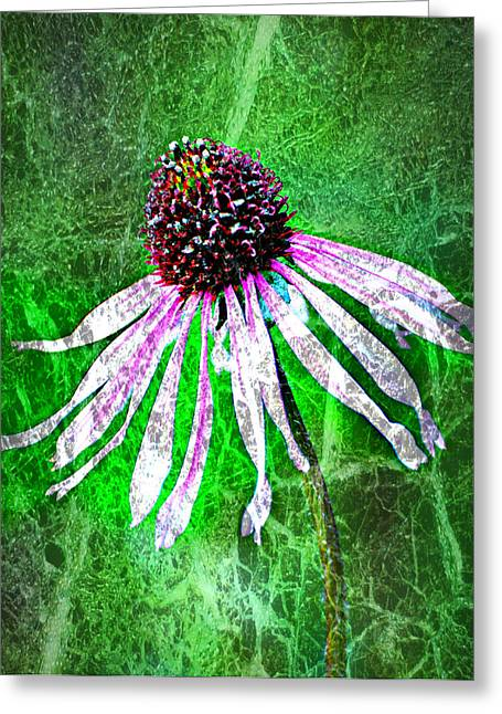 Marty Koch Greeting Cards - Gritty Coneflower Greeting Card by Marty Koch