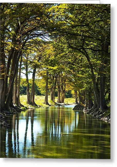 Guadalupe Greeting Cards - Guadalupe Cypress Greeting Card by Robert Anschutz