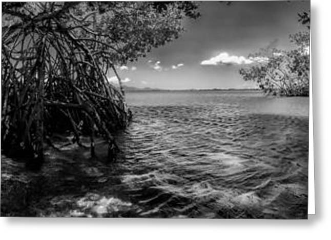 Tree Roots Greeting Cards - Guamache Beach Venezuela Panorama Greeting Card by Mountain Dreams