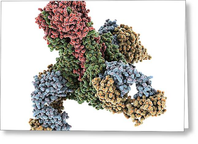 Viral Inhibitor Greeting Cards - Haemagglutinin viral surface protein Greeting Card by Science Photo Library