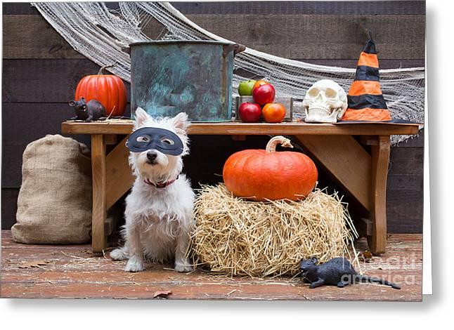 Westie Terrier Greeting Cards - Happy Halloween Greeting Card by Edward Fielding