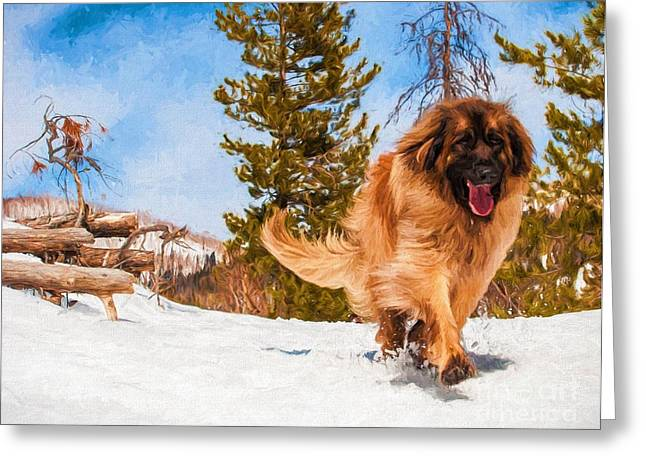 Leonberger Greeting Cards - Happy Leonberger Winter Trail Running Greeting Card by Gary Whitton