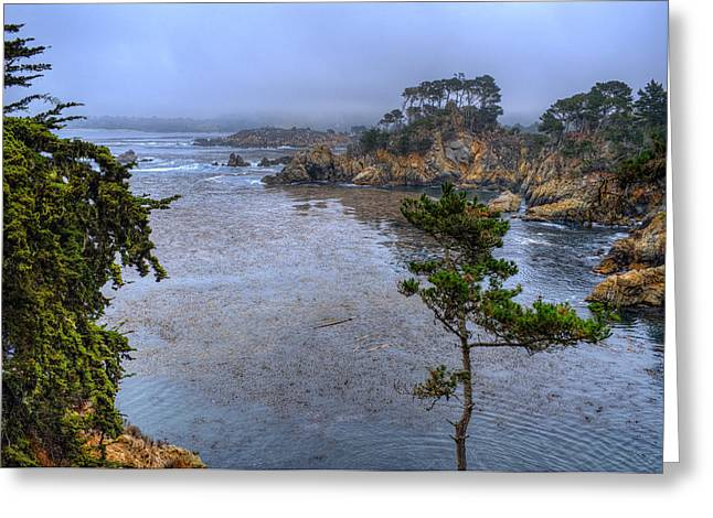 Point Lobos Photographs Greeting Cards - Harbor Seal Cove Greeting Card by Stephen Campbell