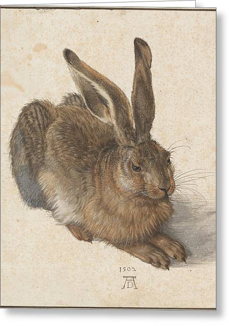 Hare Greeting Card by Albrecht Durer