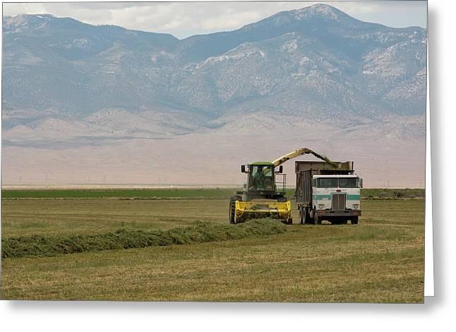 Harvesting Alfalfa Crop Greeting Card by Jim West