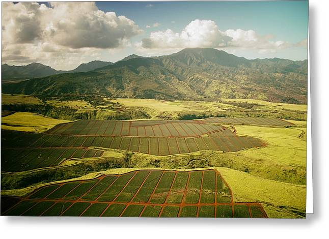 Pineapple Photographs Greeting Cards - Hawaiian Pineapple Fields Greeting Card by Mountain Dreams