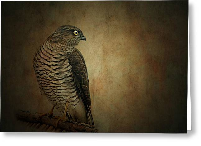 Wild Bird Mixed Media Greeting Cards - Hawk Greeting Card by Heike Hultsch