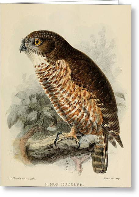 Hawk Owl Greeting Card by J G Keulemans