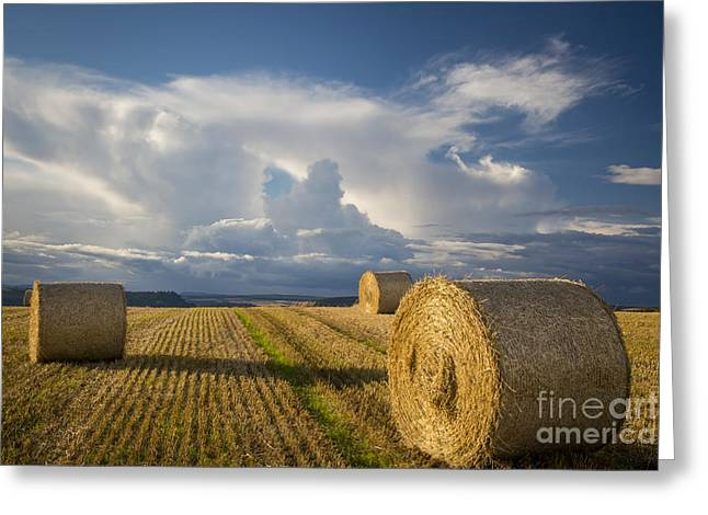 Bale Greeting Cards - Hay Bales Scotland Greeting Card by Brian Jannsen