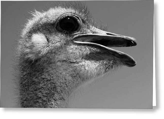 Ostrich Feathers Photographs Greeting Cards - Head in the Clouds Greeting Card by Mountain Dreams