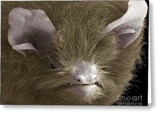 Zoology Greeting Cards - Head Of A Pipistrelle Bat Greeting Card by Steve Gschmeissner