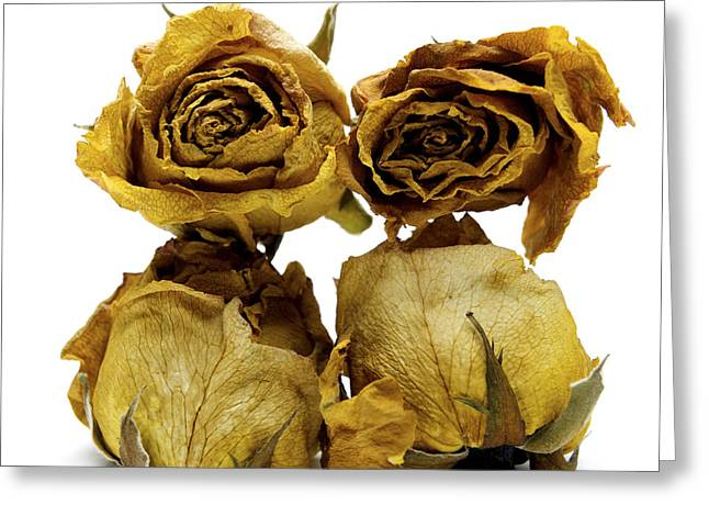 Lifeless Greeting Cards - Heap of wilted roses Greeting Card by Bernard Jaubert