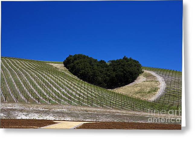 Wine Tour Greeting Cards - Heart Hill Paso Robles Greeting Card by Jason O Watson